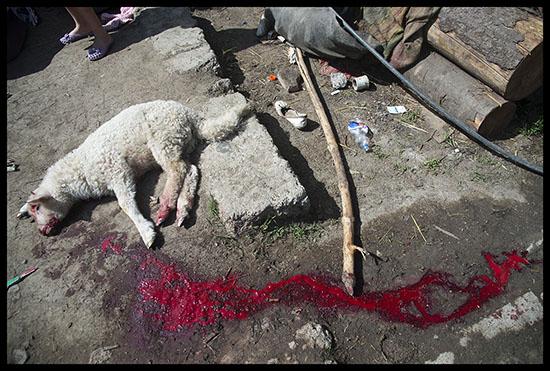 Agneau abattu pour Pâques