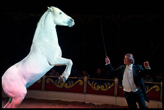 Spectacle de chevaux au cirque de Noël