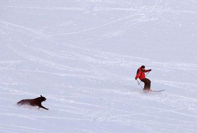 randonneur à ski avec son chien